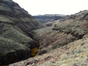 Little Jack's Creek Canyon