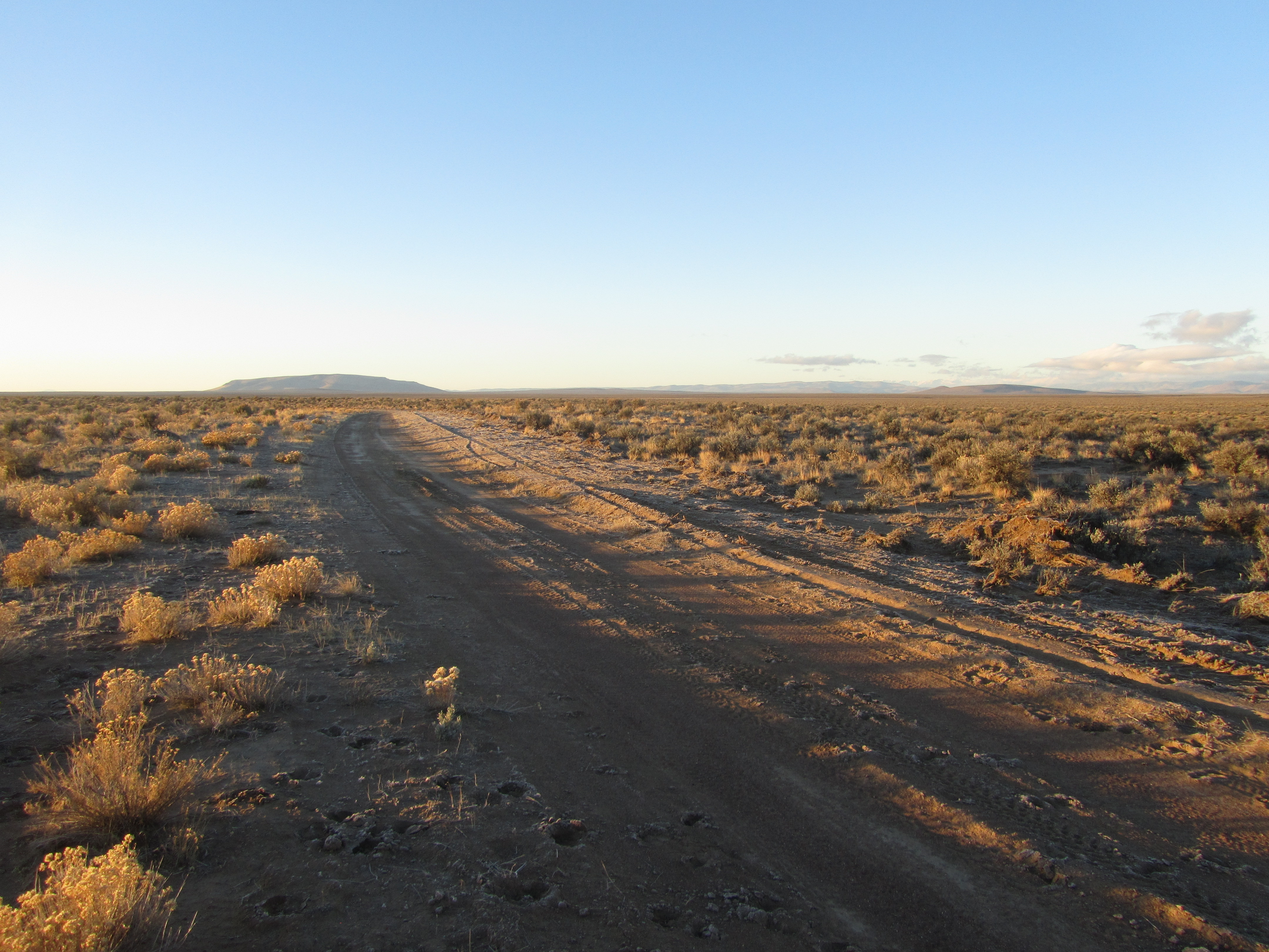Moby Goes On A Wild Chukar Chase Moby Goes
