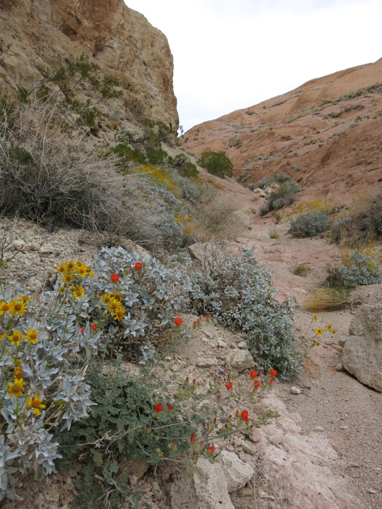Flowers in the upper canyon.