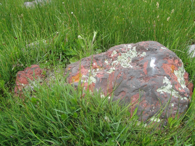 7-red rock lichen in grass