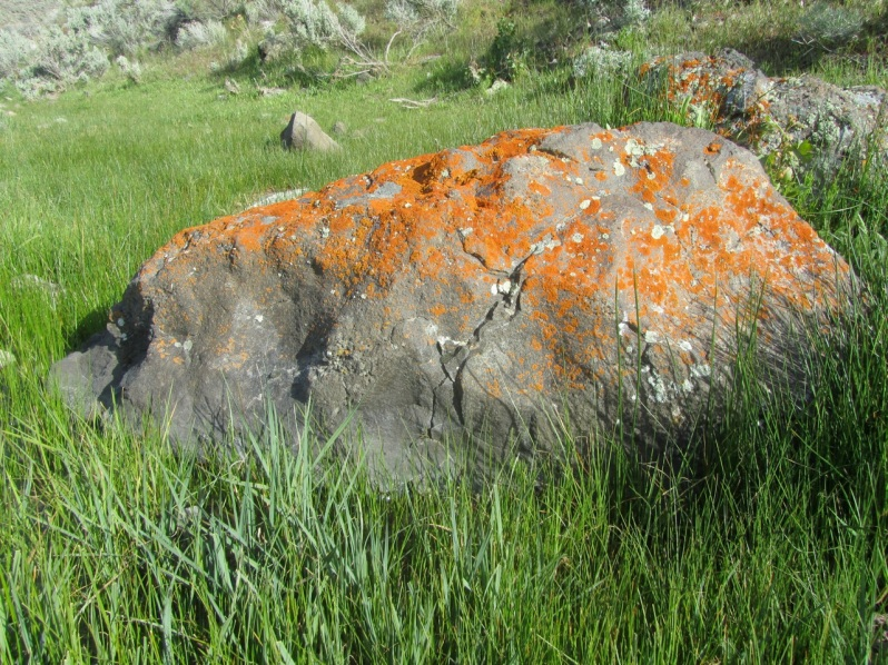 8-rocks and lichens 2