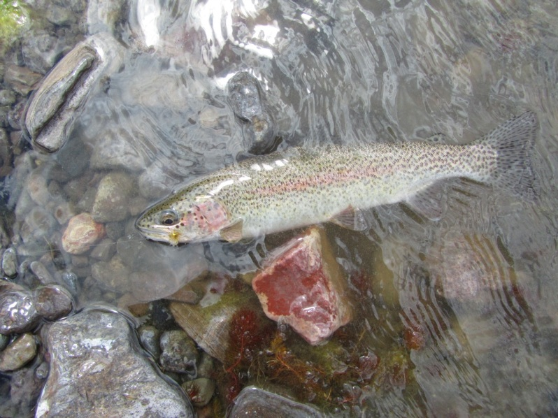 9-red rocks and trout
