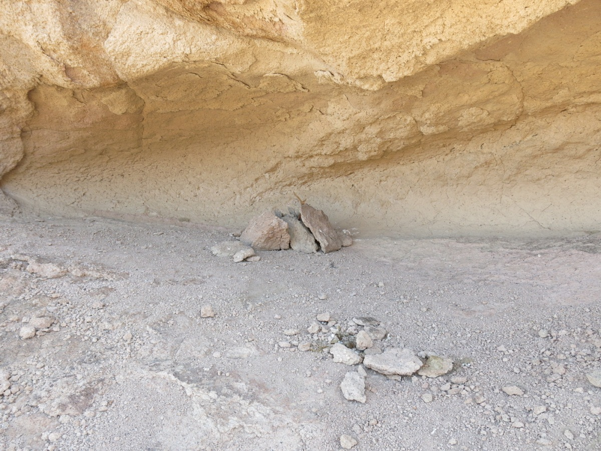 Moby Goes for a Deadfall Trap in Death Valley