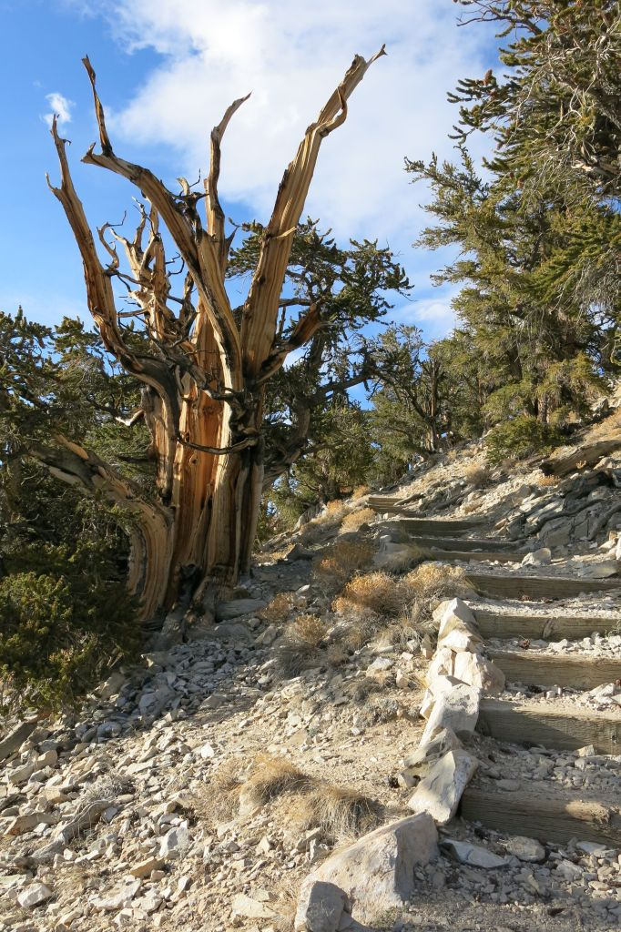 The trails, while not as old as the trees, are fine examples of excellent workmanship.