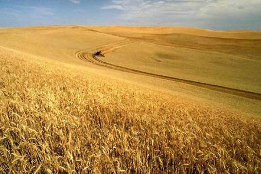 idaho wheatland