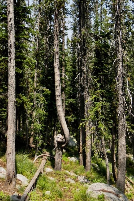 56 tree damaged