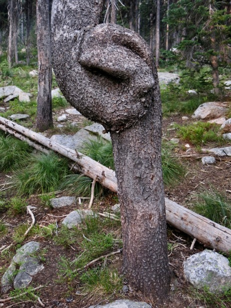 57 curly tree